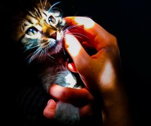 adorable, Algeria, and animal image