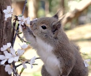 flowers, squirrel, and cute image