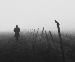 fog, southern gothic, and haunting image