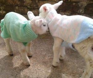 lamb, pastel, and cottagecore image
