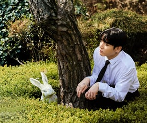 rabbit, jk, and forest image