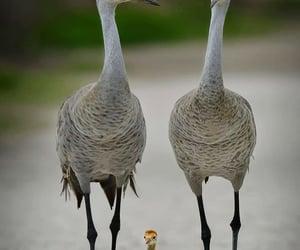 Chick, florida, and crane image
