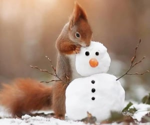 snow and squirrel image