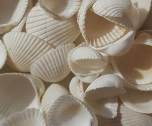 aesthetic, white, and shell image