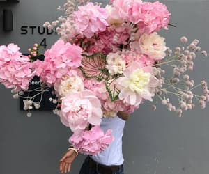 colors, roses, and flowers image