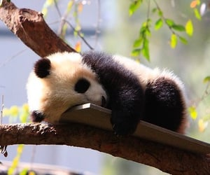 adorable, baby, and sleepy image