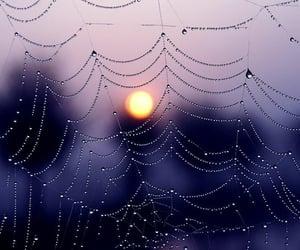 aesthetic, cobweb, and light image