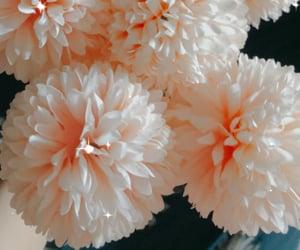 dandelion, flower, and girl image