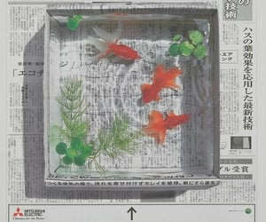 aesthetic, fish, and japan image