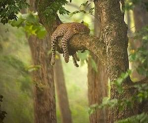 nature, tree, and animal image
