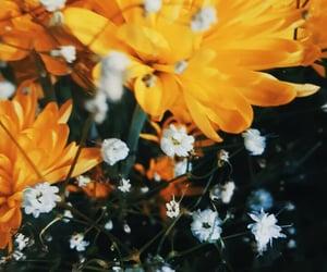 amarillo, flores, and garden image