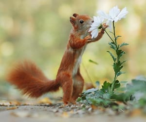 animals and flowers image