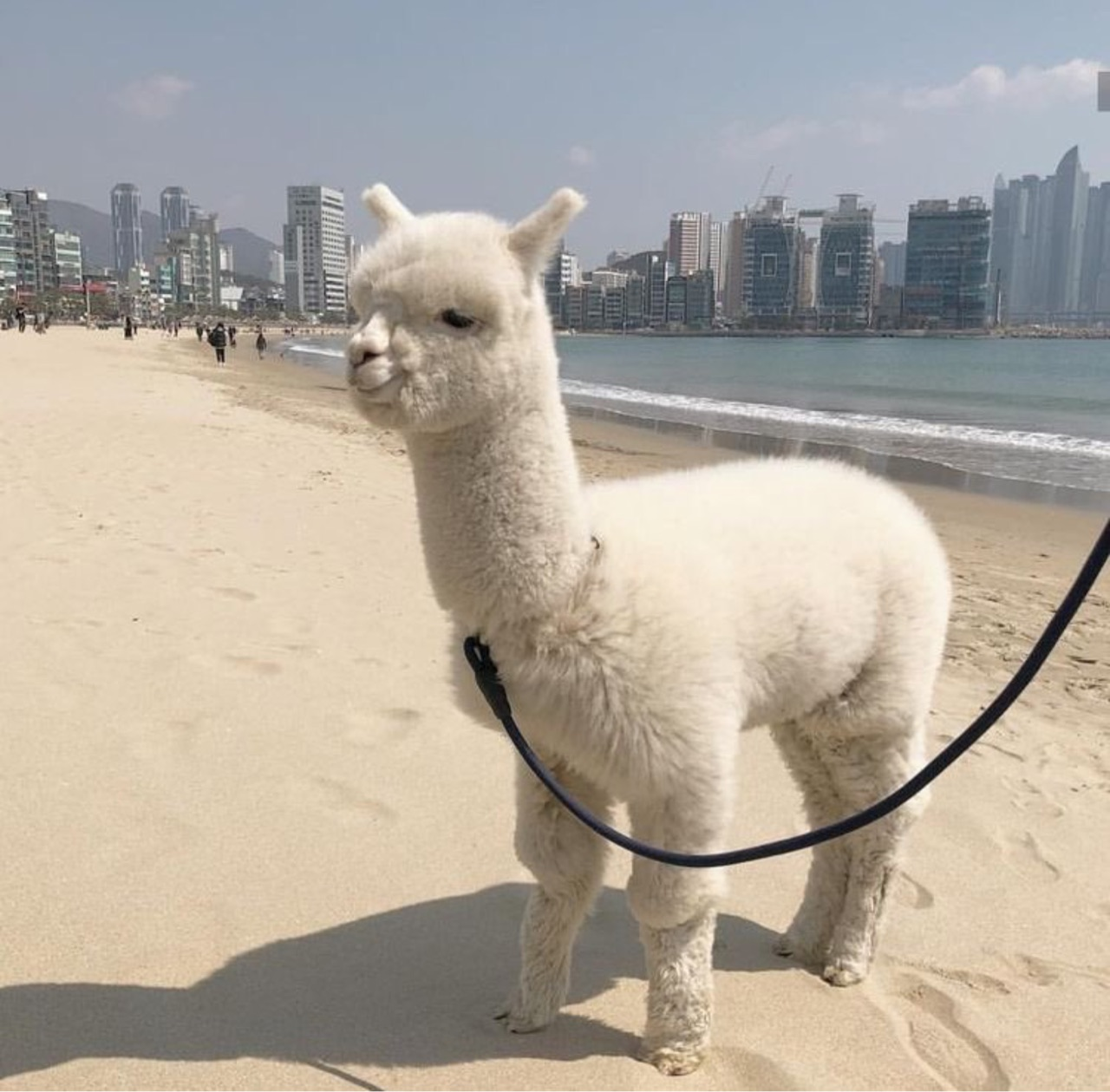 animal, aesthetic, and llama image