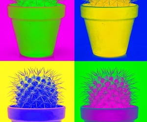 art, cactus, and colors image
