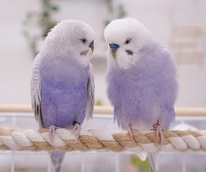 animals, beautiful, and feathers image