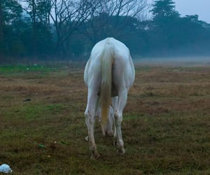 fog, horse, and southern gothic image
