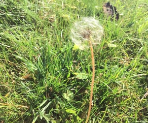 green, aesthetic, and dandelion image