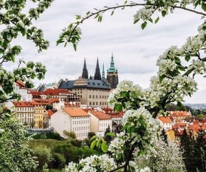 spring, flowers, and prague image