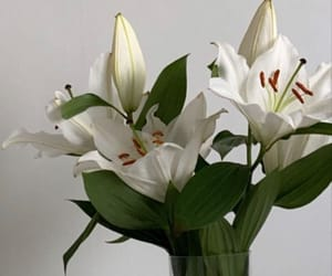 flowers, lily, and white image