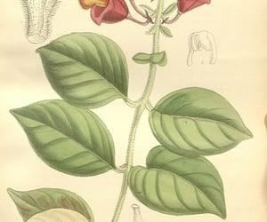 botany, periodicals, and #womeninscience image