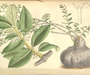 botany, pictorial works, and #womeninscience image