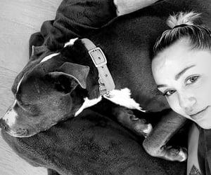 dog, dogs, and pitbull image