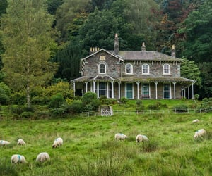 animals, cottage, and farm image