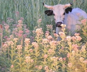 cow, flowers, and animal image