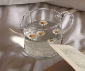 daisy, book, and flowers image