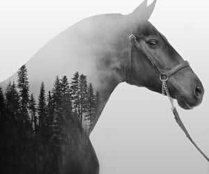 horse, horses, and black and white image