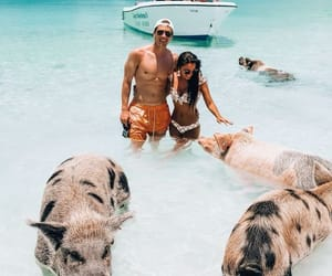 bahamas, couple, and ocean image