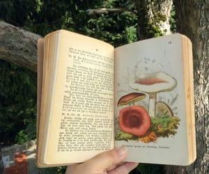 book, aesthetic, and mushroom image
