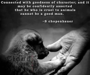 character, words, and animals image