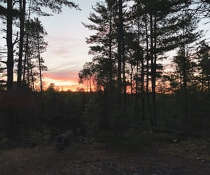 camping, sunset, and forest image