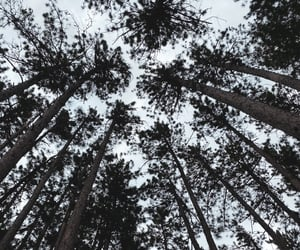 forest, nature, and hiking image