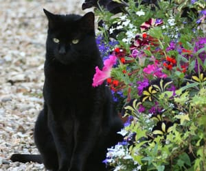 cat, animals, and flowers image