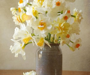 flowers and daffodils image