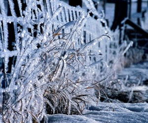 ice, fence, and snow image