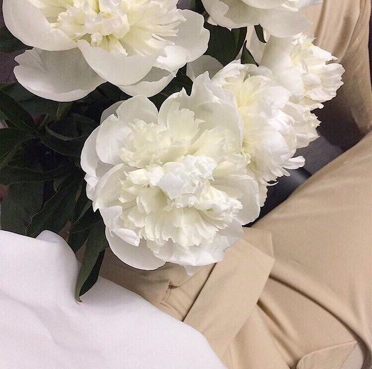 flower, aesthetic, and beige image