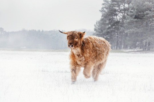 country living, countryside, and cows image