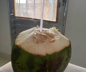 coconut and photography image