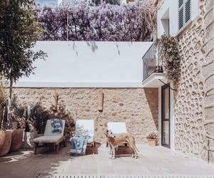 house, dog, and pool image