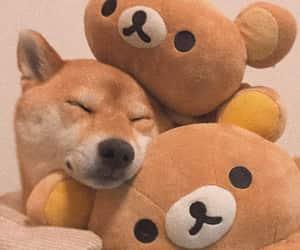 adorable, dog, and funny image