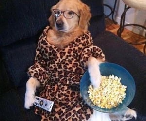 chill, doggie, and doggo image