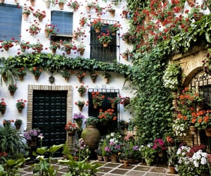 flowers, house, and plants image