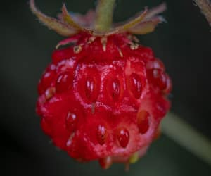 computer, tech, and raspberry image