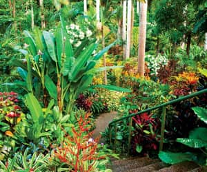 beautiful, Carribean, and nature image