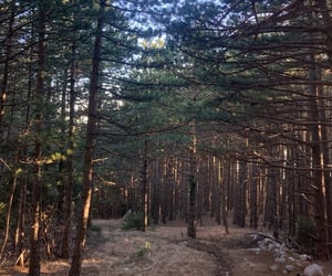 forest, hiking, and Sunny image