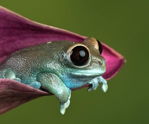 flowers, frog, and frogs image