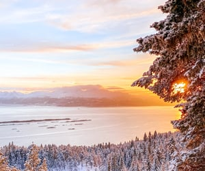 beautiful, christmas, and colors image